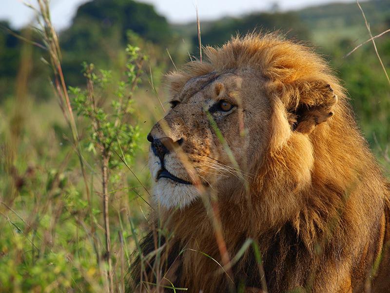 ケニアで野生動物・観察三昧!の旅レポート
