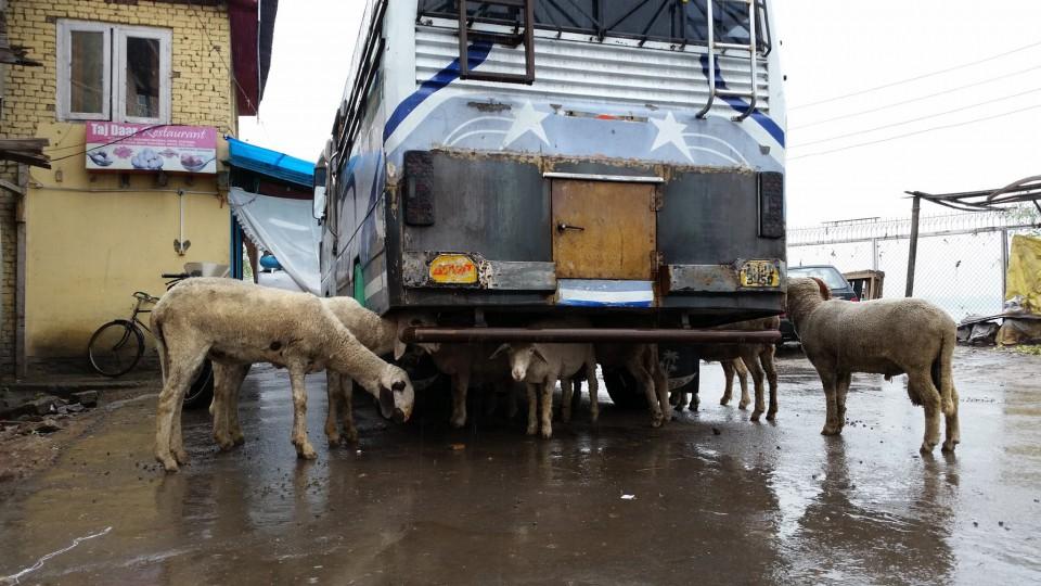 インドの雨