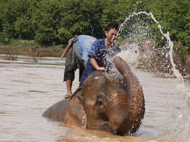 世界遺産の街の郊外で象使い養成コース体験