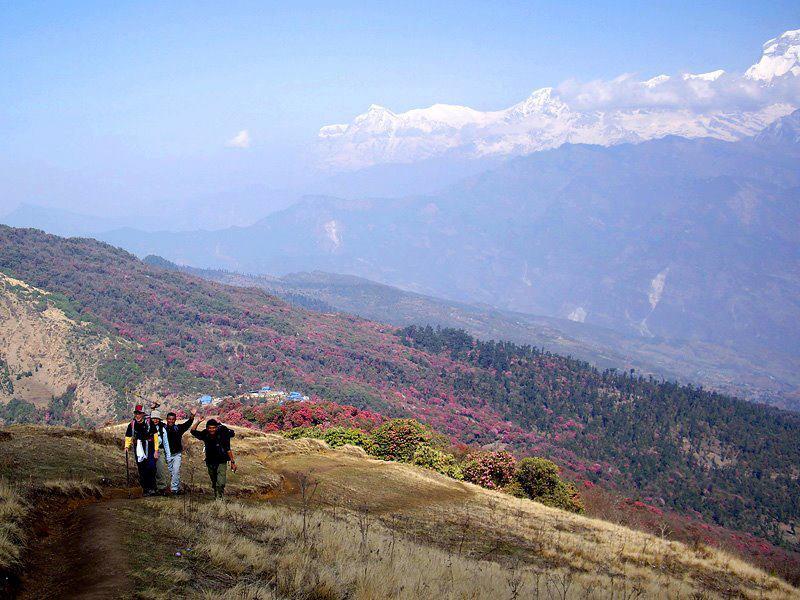 ネパールのシャクナゲ