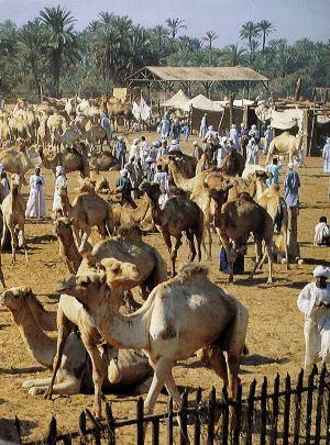 エジプトのキャメルマーケット(ラクダの市場)