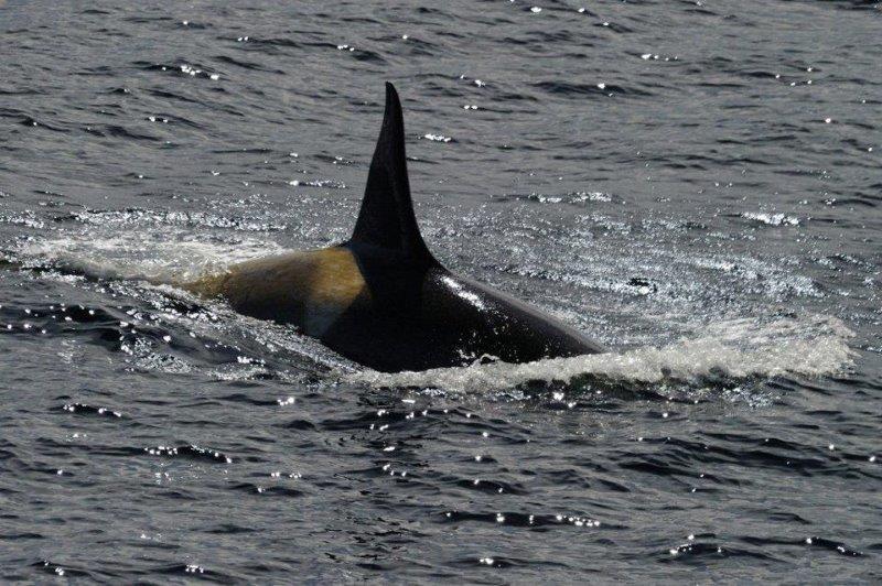 シャチも見られる海鳥ウォッチング