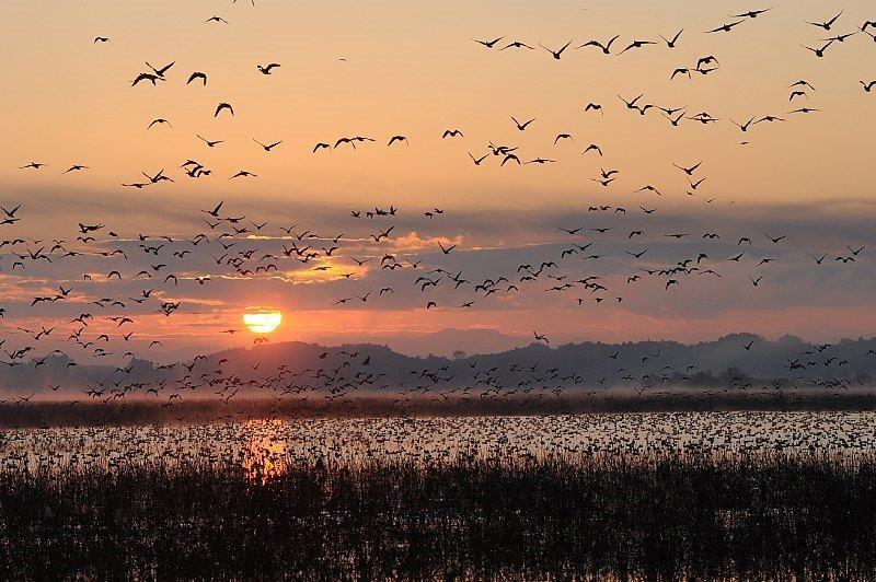雁が織り成す風景