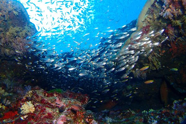 ダイバーの憧れ!タイのダイビングスポット『シミラン諸島』