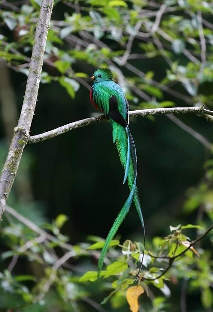 世界一美しい鳥!