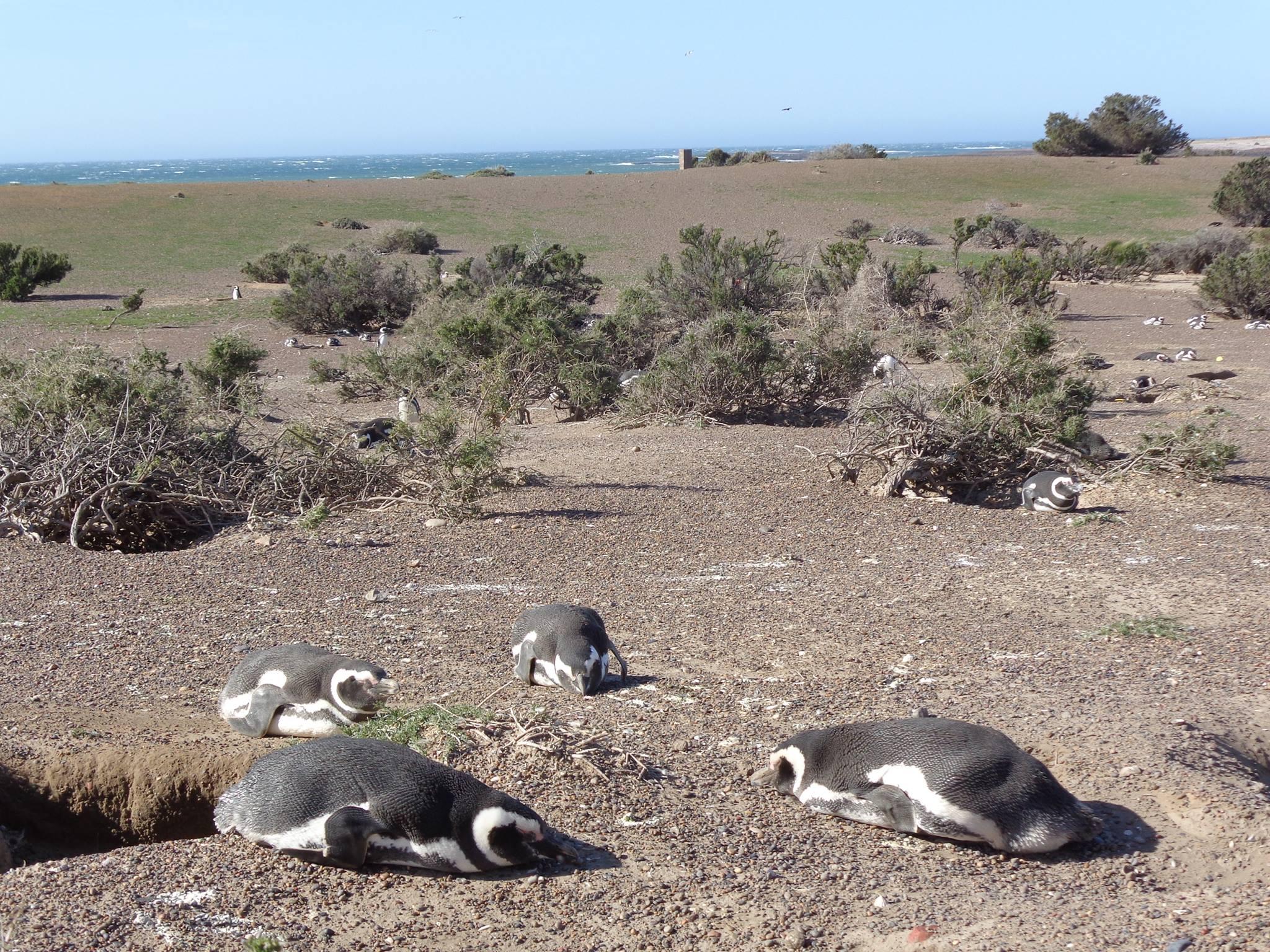 野生のペンギンウォッチングはここ!アルゼンチン・バルデス半島