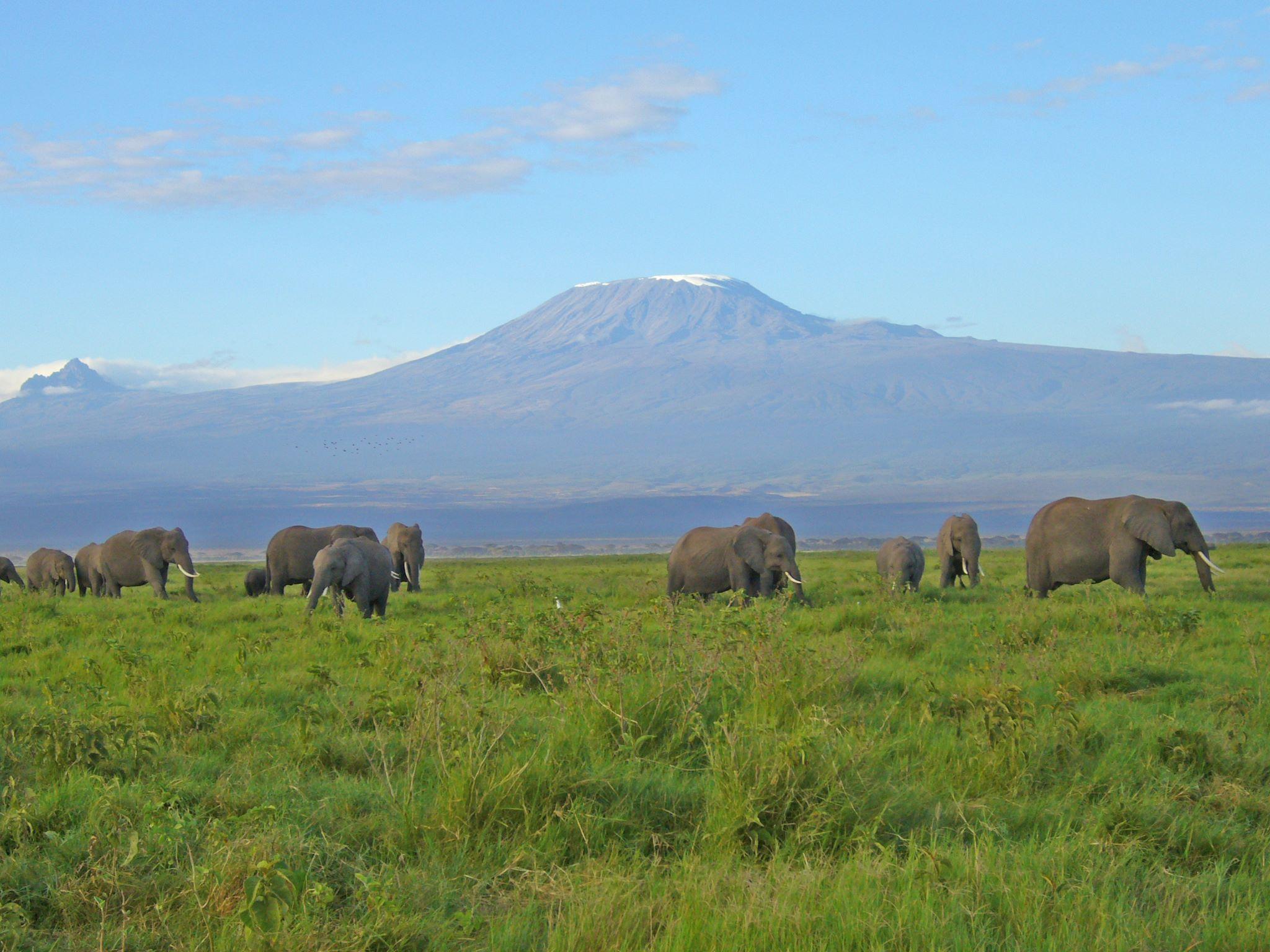 アフリカの大地を感じに、キリマンジャロに登ってみよう!