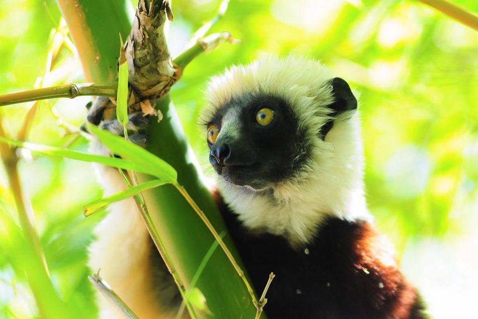 希少な動植物の宝庫マダガスカル