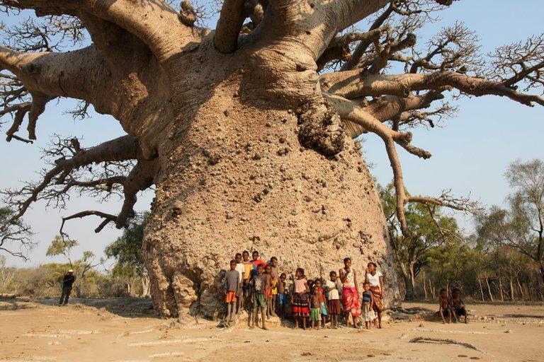 マダガスカル最大のバオバブ「ツィタカクイケ」