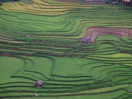 ベトナムでもっとも美しい棚田『サパ地方』がアツい!