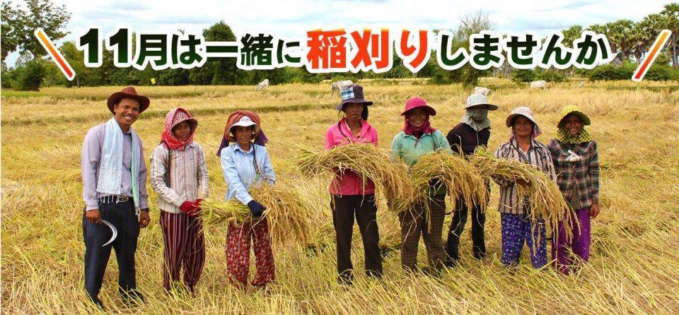 300人が親戚というカンボジアの村で稲刈り体験しませんか?