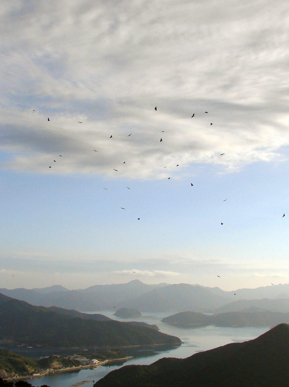 渡り途中のハチクマ観察スポット、長崎県福江島