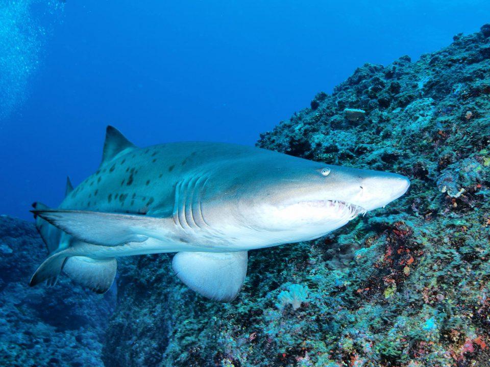 巨大なサメやエイが見られる、小笠原の「とびうお桟橋」